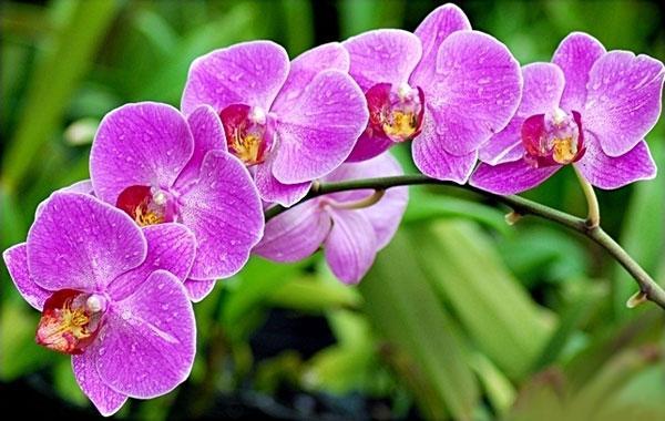 15-bi-quyet-trong-hoa-phong-lan Đặc tính sinh học của hoa lan