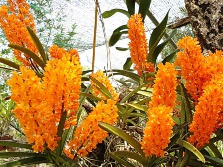 bi-quyet-thuan-duong-va-cham-soc-lan-rung-1 Bí quyết thuần dưỡng và chăm sóc lan rừng