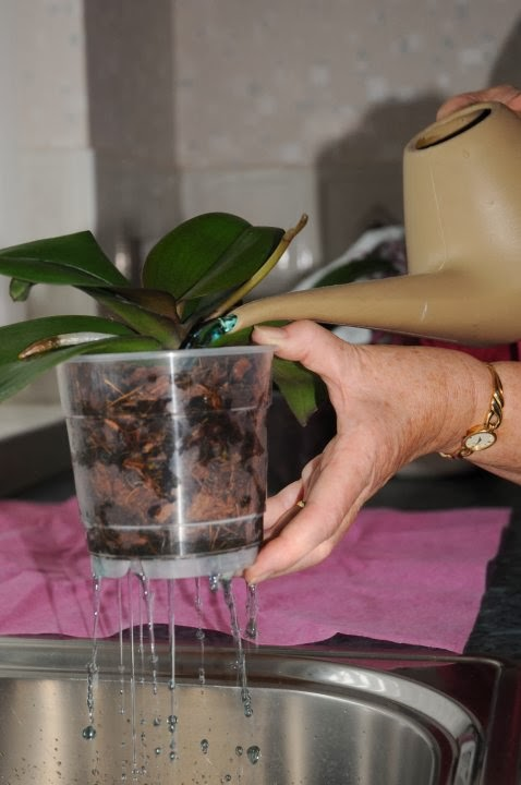 mot-so-kinh-nghiem-cham-soc-hoa-lan-1 Một số kinh nghiệm chăm sóc hoa lan