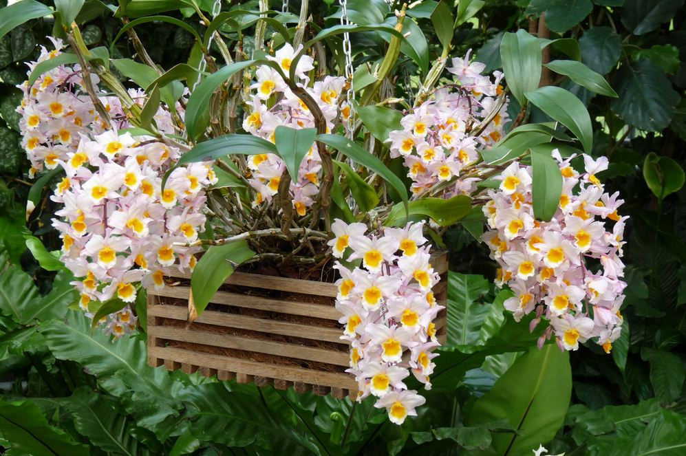 mot-so-kinh-nghiem-cham-soc-hoa-lan Một số kinh nghiệm chăm sóc hoa lan