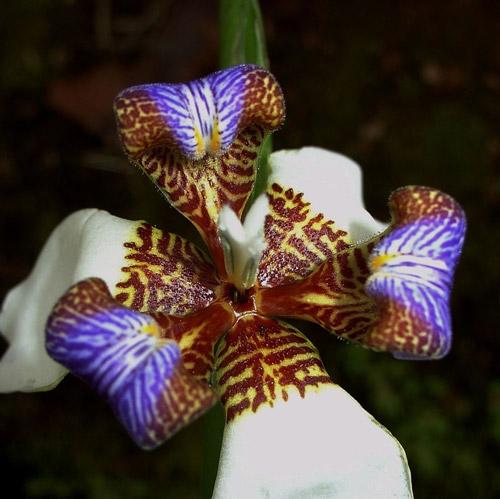 anh-sang-nhu-the-nao-la-tot-nhat-cho-lan4 Yếu tố ánh sáng ảnh hưởng đến sự phát triển của hoa lan thế nào?