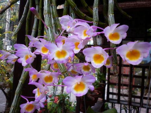 lan-rung-tuyet-dep-viet-nam-9 Lan rừng tuyệt đẹp Việt Nam