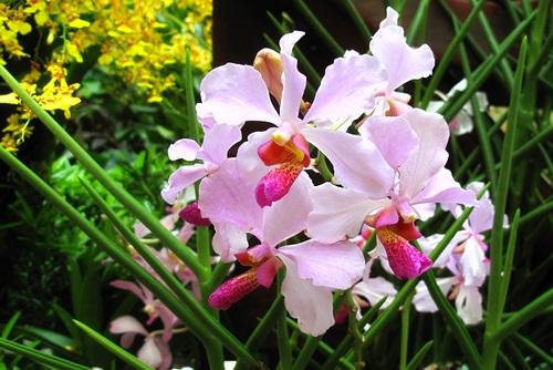 nhung-loai-hoa-lan-co-hinh-dang-giong-dong-vat-8 Những loài hoa lan có hình dáng giống động vật