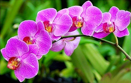 nhung-loai-sau-benh-tren-cay-hoa-lan-va-cach-phong-tri Những loài sâu bệnh trên cây hoa lan và cách phòng trị