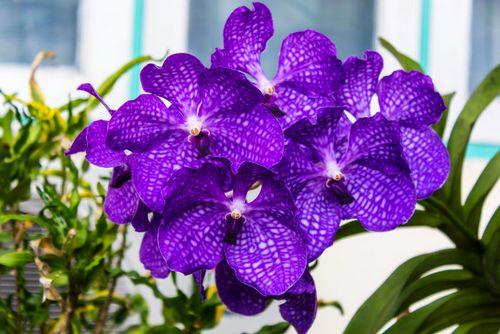 y-nghia-cua-loai-hoa-phong-lan-1 Ý nghĩa của loài hoa phong lan