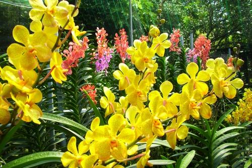 nhung-cau-hoi-thuong-gap-ve-hoa-lan-2 Những câu hỏi thường gặp về hoa Lan