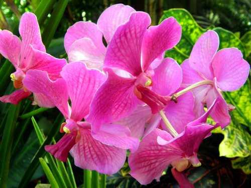 nhung-cau-hoi-thuong-gap-ve-hoa-lan-3 Những câu hỏi thường gặp về hoa Lan