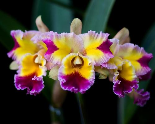 nhung-cau-hoi-thuong-gap-ve-hoa-lan-5 Những câu hỏi thường gặp về hoa Lan