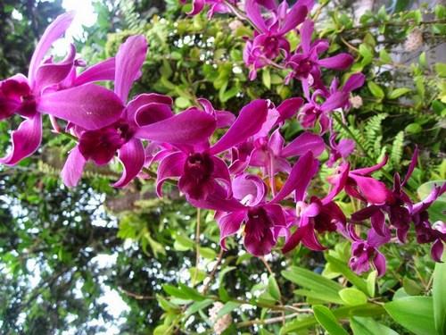 nhung-cau-hoi-thuong-gap-ve-hoa-lan-6 Những câu hỏi thường gặp về hoa Lan
