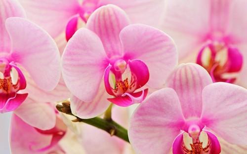 nhung-cau-hoi-thuong-gap-ve-hoa-lan-7 Những câu hỏi thường gặp về hoa Lan