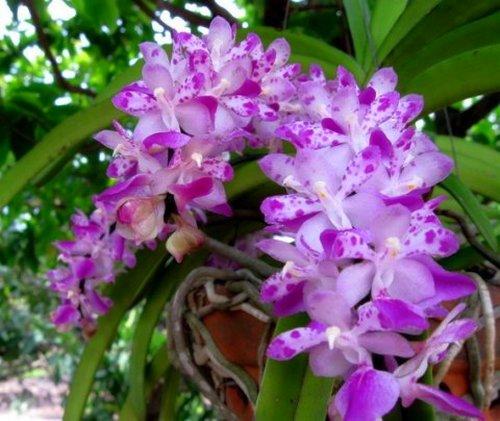 nhung-cau-hoi-thuong-gap-ve-hoa-lan Những câu hỏi thường gặp về hoa Lan